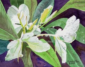 Watercolor Painting Sweet White Ginger