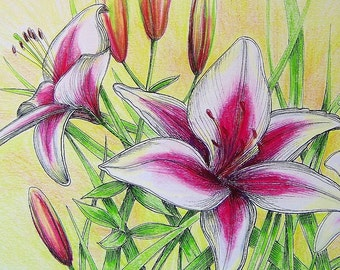 DOUBLE DAYLILIES - Hand Colored Botanical Print 11 x 14