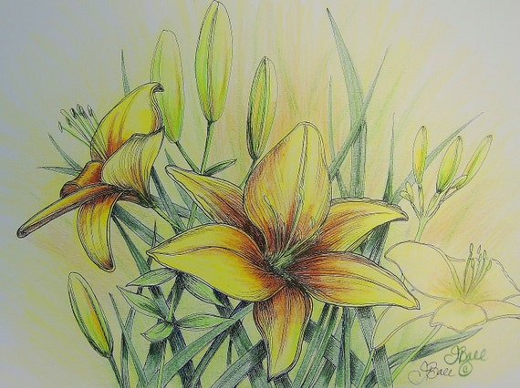 DAYLILIES IN YELLOW - Hand Colored Botanical Print 11 x 14