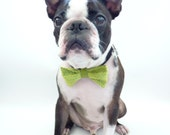"Pet Bow Tie / The ""BubbaBow"" Tie for Happy Pets- Green Vietnamese Silk with Leather Accent"