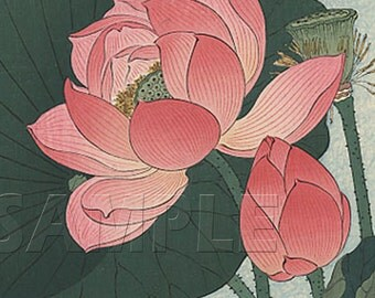 Flowering Lotus- Beautiful - Vintage Art  Reproduction