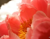 "5x7"" Coral Peony 1-Fine Art Photograph"