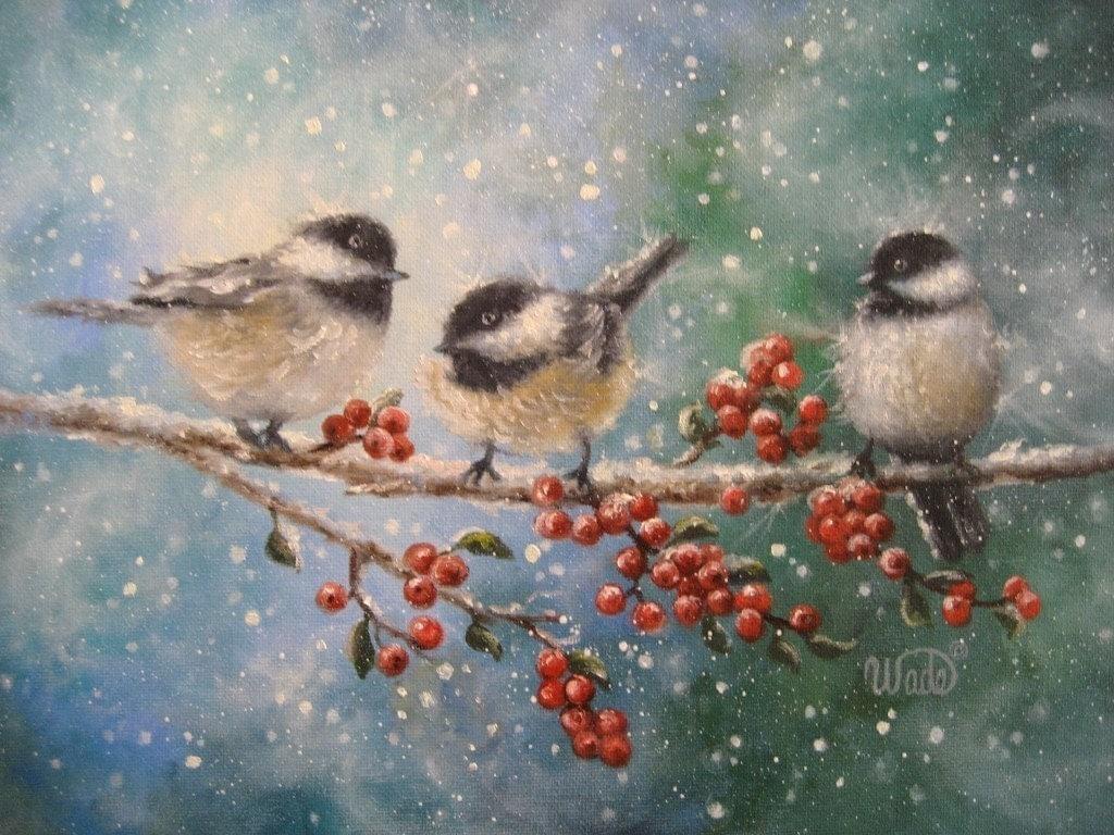 Winter bird images - photo#52