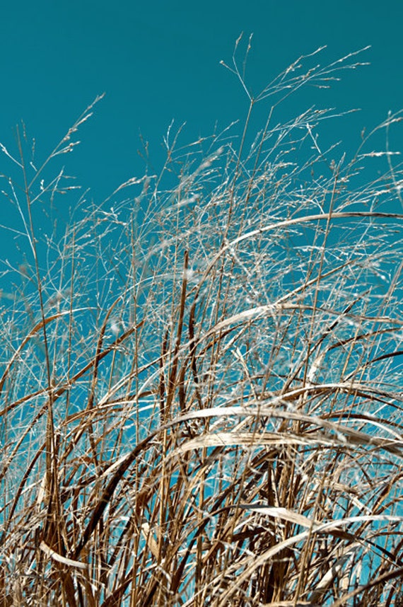 Sea Grass & Sky - Aluminum Print