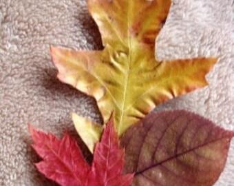 1000 Dried Fall Leaves for Autumn Organic wedding decor