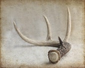 READY to SHIP Natural History Series The Antler Shed 8x10 Archival Photograph