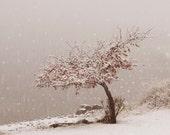 Fine Art Photography Snowflake Art Winter Art Snow Fall First Snow at the Lake 8x10 Fine Art Photograph