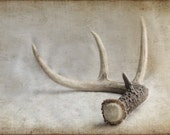 READY to SHIP SALE Natural History Series The Antler Shed 8x12 Archival Photograph