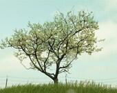 Spring Green Fine Art Photography  Apple Tree 11x14 Fine Art Photograph