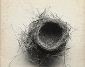 French Country Empty Nest  Rustic Decor Ivory Black and White Natural History 8x8   Archival Photograph