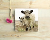 For Her Two White Cows Gallery Mounted 10x10 archival Photograph