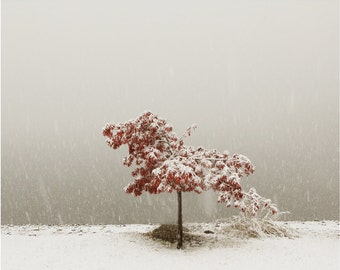 Photography Landscape Snow Art Winter Art Snow Zen Landscape Art Photography    Snow Falling on Maple