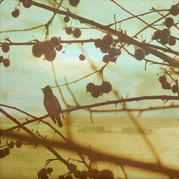 Bird at the Beach 8x8 Fine Art Photo
