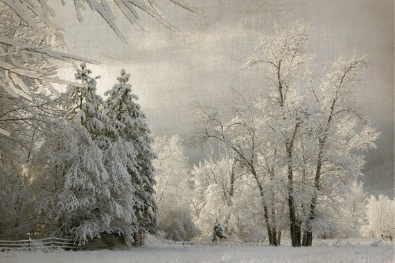 Holiday Sale Winter 8x12 Fine Art Photograph