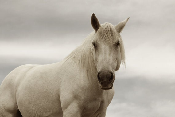 Monochromatic Photography White Horse  Fine Art Horse Photography  White Horse 11x14 or 8x12  Archival Photograph Equine