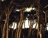 Golden Gate Park, 8.5x11 Fine Art Print