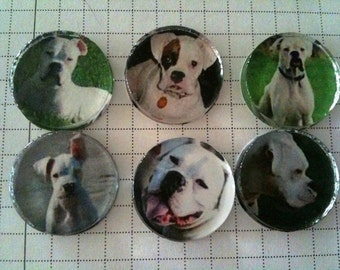 """Handmade """"White Boxer"""" Dog Magnets"""