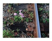 5 DOLLAR CLEARANCE SALE - Flowers on the Tracks - 8x10 High Quality Photo Print w/White Border