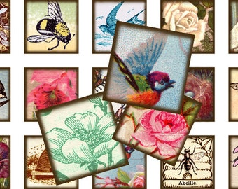 Birds & Bees inchies 1x1 inch square inchies Instant Download digital collage sheet 015