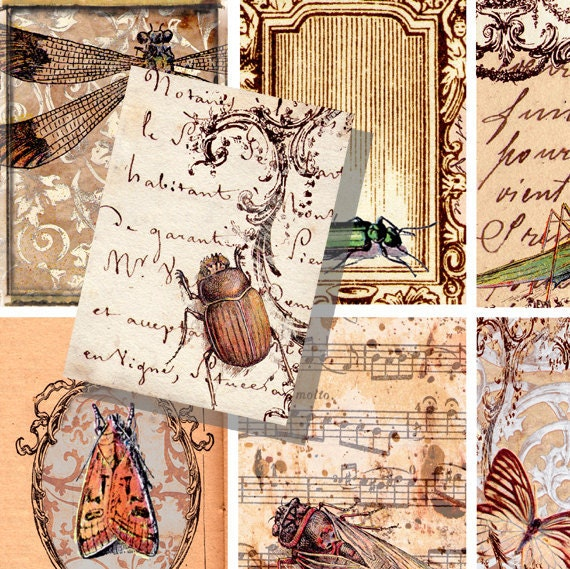 Beetle Dragonfly bugs insects gift tags ATC 2.5 x3.5 inch digital image Instant Download 025