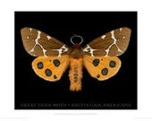 Great Tiger Moth poster