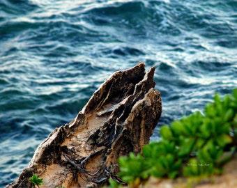 Nature's Sculptures VII - Hawaii photo- fine art photography- fine art print- abstract photography- nature photography- wall art- home decor