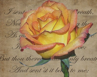 Romantic Rose- fine art print- mixed media, fine art photography, altered art, photo montage, wall art, home decor, office decor, gift