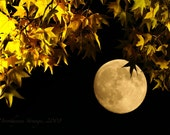 Full moon, fall leaves, art photography, harvest moon, wall decor, autumn, nature, landscape, mood