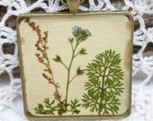 Genuine Pressed Sorrel and Forget Me Not Flowers, Wild Carrot Greens Pendant