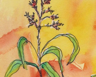 Wild Plant - Watercolor Painting