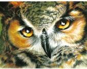 Owl Eyes II