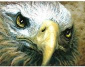 Eagle Eyes ll