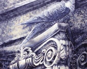City Bird...Kestrel