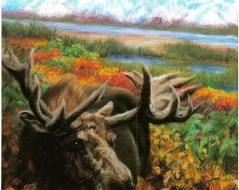 Moose...Autumn in Alaska