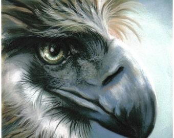 Bird.... Philippine Eagle Hawk