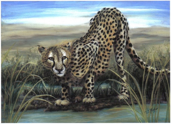 Watering Hole Series- Cheetah