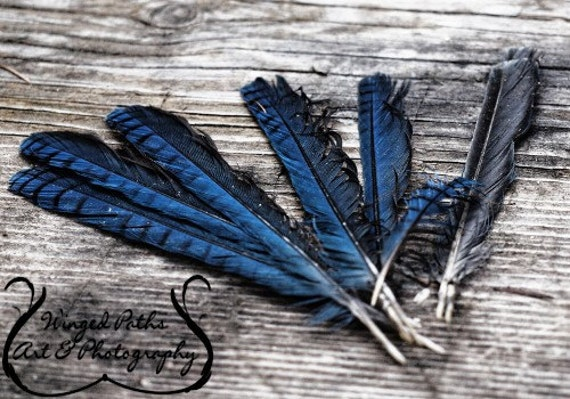Sapphire Feathers - 5 x 7 Fine Art Photo Print