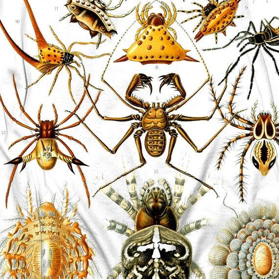 Spider Tshirt Insect Arachnid Bug WOMENS Shirt