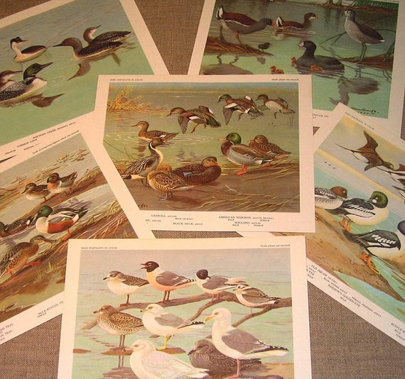 Bird Prints, Water Birds, Vintage Prints, Set of Six, Ready to Frame Vintage Prints, Bookplates, Ducks Seagulls Loons Geese
