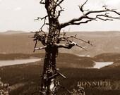 Fall photography Sepia Woodland Brown Rustic Metallic Print TREE--5 x 7 photograph fine art original