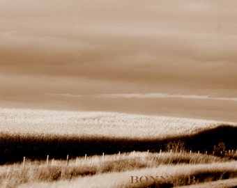 winter photography harvest brown sepia minimalist  on Metallic paper 5 x 7 nature photography moody