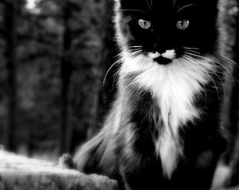 black cat photography kitten black and white  5 X 7 fine art photograph