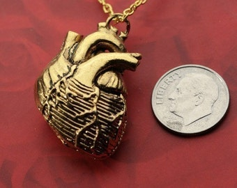 "Anatomical Heart in 24k Gold Plate, on an 24"" Gold Plated Chain (Original Design, Made in NYC)"