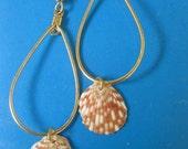 Gold Hoop Earrings with Hawaiian Tiger Striped Shells