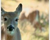 Deer Photo, Woodland Nursery Art, Baby Deer Print, Brown, Beige, Neutral, Green, Nature Photography, Deer Photo
