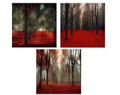 SALE, Nature Photography, Red Rustic Wall Art Set of 3 Prints Red Forest in Black and Red