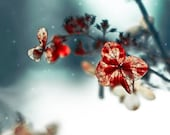 Blue Christmas, holiday decor, red leaf, teal, white, winter photography, titanium gray, flower, wall art, - Raceytay