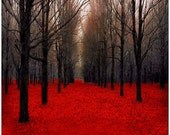 Red Halloween Nature Photography, Fall, Black Forest Wall Decor- Spooky- Fiery Autumn - Raceytay