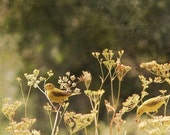 Bird photograph - autumn fine art photography print - 8x8 home decor - havest gold  and green picture - shabby chic cottage decor