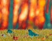 Bird Photo, Nature photography, Orange, Gray, Green, Rustic Decor, Fall Forest, Bird Print, Juncos